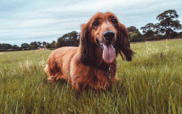 Healhy Pets Masterclass