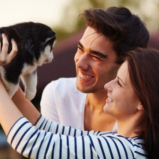 How To Keep Your Pets Happy and Healthy