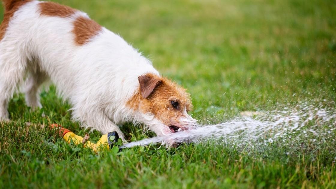 The Benefits Of Kangen Water On Animals